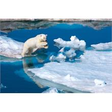 Clementoni 39304 National Geographics 1000 Parça Polar Bear Puzzle