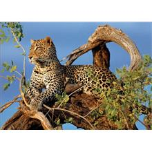 1000 Parça Jaguar Puzzle (Clementoni High Quality Collection)