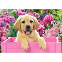 Castorland 500 Parça Puzzle Labrador Puppy in Pink Box