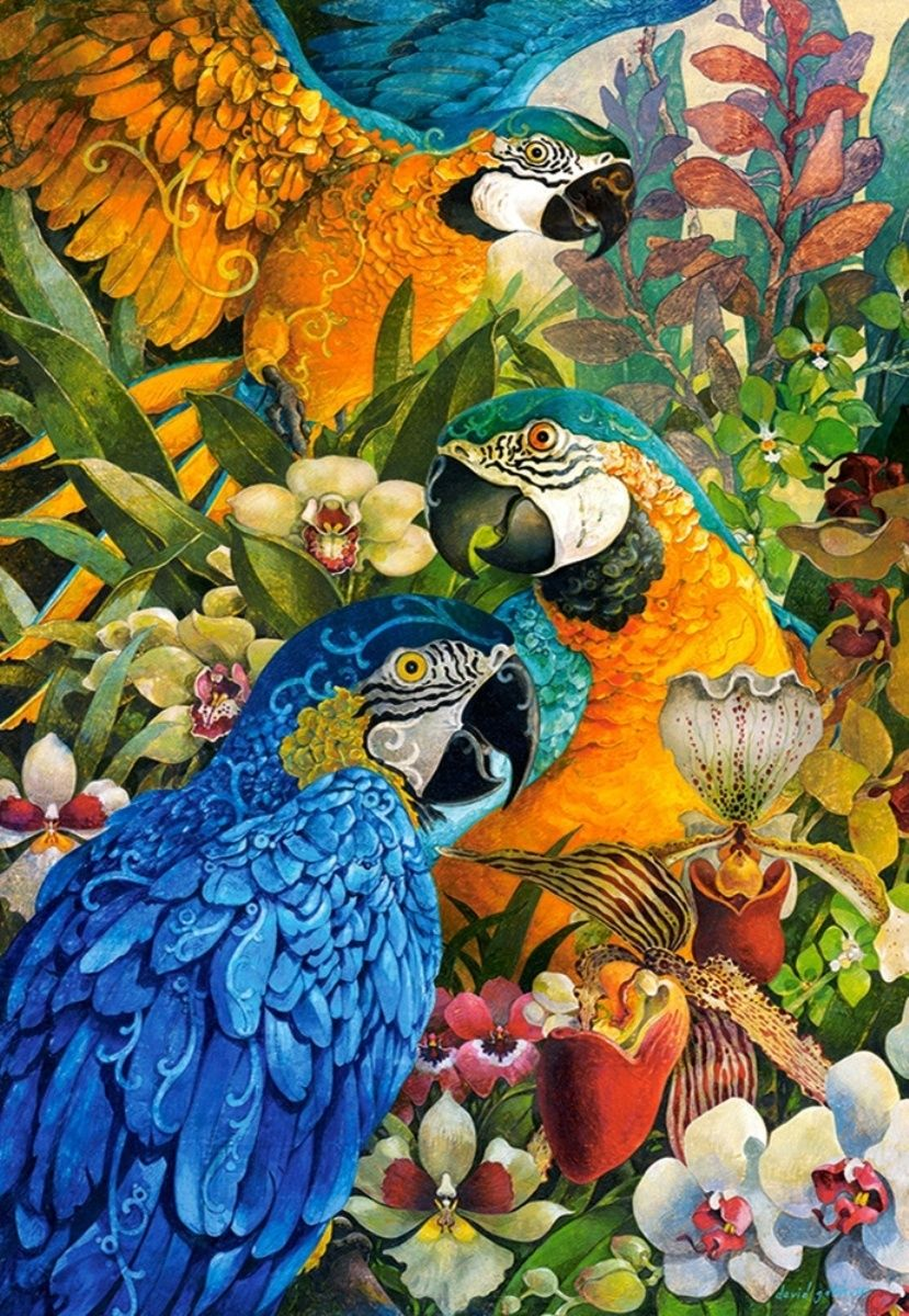 1000 Images About Spa: Castorland 1000 Parça Amazon Puzzle