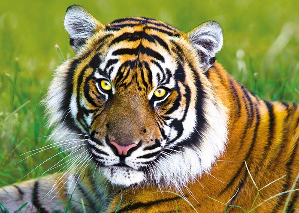 Vahşi hayvanlar: liste, özellikler, ortak özellikler