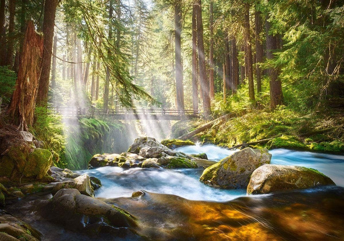 Castorland 500 Parça Forest Stream of Light Puzzle