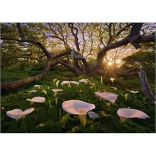 Heye 1000 Parçalık Calla Clearing Puzzle - Marc Adamus - Magic Forests
