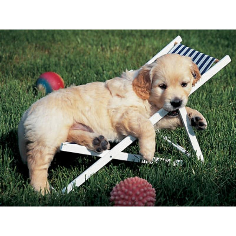 Ravensburger 500 Parça Puzzle Golden Retriever