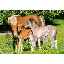 Castorland 120 Parça Puzzle Ponies in the Meadow