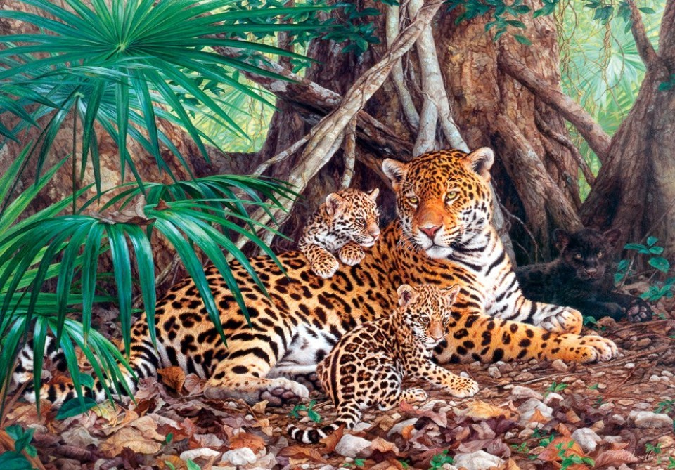 Castorland 3000 Parçalık Puzzle Jaguars in the jungle