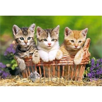 castorland-500-parca-puzzle-three-lovely-kittens-57.jpg