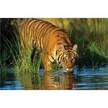 Masterpieces 1000 Parça Puzzle Tiger s Time Out